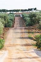 Dirt road leading up to the winery. Herdade da Malhadinha Nova, Alentejo, Portugal