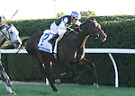 LEXINGTON, KY - OCTOBER 08:  #7 Miss Temple City wins the Shadwell Turf Mile over # 8 Ironicus at Keeneland on October 8, 2016 in Lexington, Kentucky. (Photo by Jessica Morgan/Eclipse Sportswire/Getty Images)