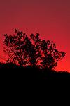 Sunrise at Amarugia Conservation Area, MO