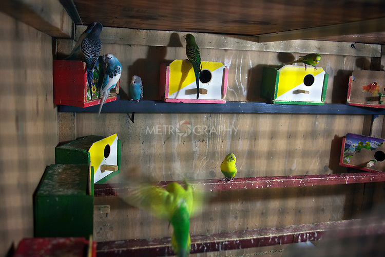 16/11/14. Alqosh, Iraq. Birds are seen in an enclosure at the orphanage. Father Yousif looks after the birds and teaches the orphans about caring for them.