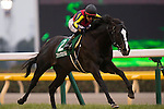 FUCHU,JAPAN-FEBRUARY 05: Black Spinel #2,ridden by Mirco Demuro,wins the Tokyo Shimbun Hai at Tokyo Racecourse on February 05,2017 in Fuchu,Tokyo,Japan (Photo by Kaz Ishida/Eclipse Sportswire/Getty Images)