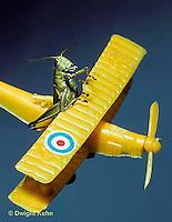 GF03-002b  Funny Grasshopper - pilot flying airplane