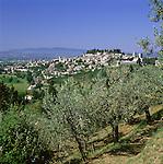 Italy, Umbria, Spello: view of ancient town with olive trees | Italien, Umbrien, Spello: Urspruenglich umbrisch-etruskische Nachbargemeinde von Assisi
