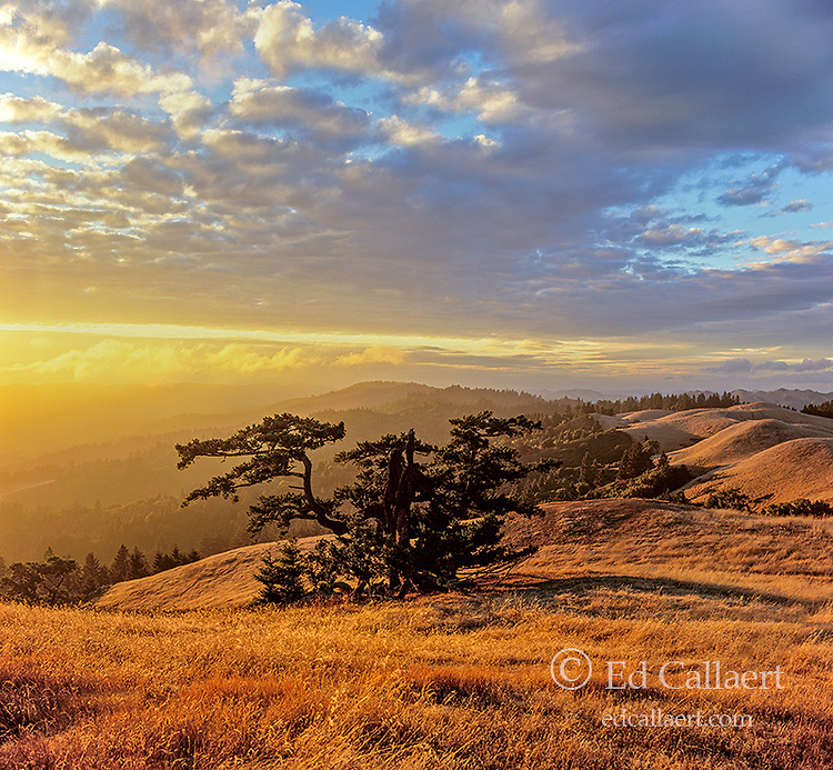 Sunset, Bolinas Ridge, Mount Tamalpais State Park, Golden Gate National Recreation Area, Marin County, California