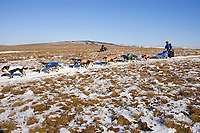 Martin Buser on snowless tundra just up from the Unalakleet river nearing Unalakleet