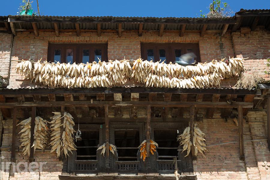Drying Corn in the Sun at Bungamati, Nepal