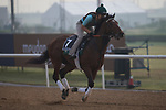 DUBAI,UNITED ARAB EMIRATES-MARCH 23: Earnshaw,trained by Salem Bin Ghadayer,exercises in preparation for the Al Quoz Sprint at Meydan Racecourse on March 23,2017 in Dubai,United Arab Emirates (Photo by Kaz Ishida/Eclipse Sportswire/Getty Images)