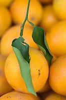 """Asie/Israël/Galilée/Rosh Pina/Safed: Oranges bio de la ferme de l'Hotel Restaurant """"Mizpe Hayamim"""" créé par le docteur Yaros Yaroshlavsky dans les années 60"""