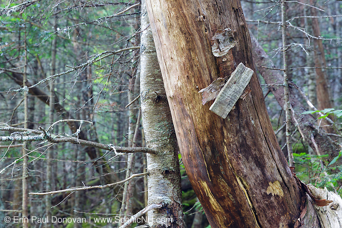 Remnants of a trail marker along the abandoned extension of the Brookside Trail, above Duck Fall, in the Snyder Brook drainage of Low and Burbank's Grant, New Hampshire during the summer months. Completed in 1916, this extension of the Brookside Trail was abandoned by the Randolph Mountain Club (RMC) in 1980.