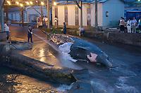 Baird's beaked whale, Berardius bairdii, female, Wadaura, Boso Peninsula, Japan, Pacific Ocean