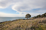 Westside Reserve is a stellar shoreline rivaling Big Sur, preserved by the San Juan Land Trust, San Juan Island, Washington State, USA