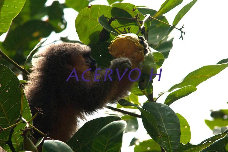 Reserva Extrativista Tapajós-Arapiuns.<br /> Santarém, Pará, Brasil.<br /> Foto Carlos Barretto/AcervoH<br /> 2012
