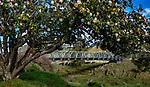 Taranaki Bridges