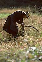 Europe/France/Auvergne/15/Cantal/Le Rouget: Agricultrice lors d'une fenaison à la faucille [Non destiné à un usage publicitaire - Not intended for an advertising use] [<br /> PHOTO D'ARCHIVES // ARCHIVAL IMAGES<br /> FRANCE 1980