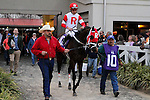 February 21, 2015: International Star with Miguel Mena up in the Risen Star Stakes at the New Orleans Fairgrounds Risen Star Stakes Day. Steve Dalmado/ESW/CSM