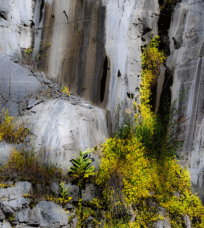 """""""GRANITE & WILDFLOWERS""""<br /> <br /> Yellow yarrow contrast against sheer granite walls which have been colored by time. These <br /> <br /> walls were blasted into existence in order to build a reservoir, Lake Koocanus, in Montana. Nature has her way of turning messes humans make in to things of beauty."""
