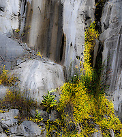 """GRANITE & WILDFLOWERS""<br />