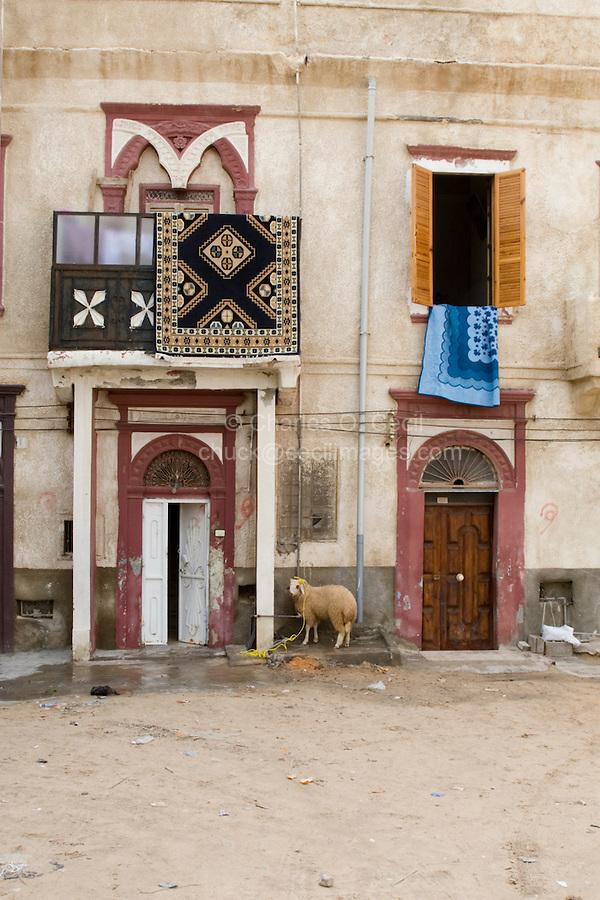 Tripoli Medina, Libya - Eid al-Adha, Id al-Adha.  Sheep outside the family door awaits his sacrifice on the eid, the annual feast when Muslims commemorate God's mercy in allowing Abraham to sacrifice a ram instead of his son, to prove his faith.
