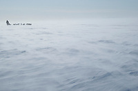 Aaron Burmeister runs into the 35 mph wind on Norton Sound between Shaktoolik and Koyuk during Iditarod 2009