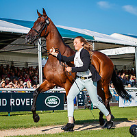 USA-Savannah Fulton presents Captain Jack during the First Horse Inspection. 2019 GBR-Land Rover Burghley Horse Trials. Wednesday 4 September. Copyright Photo: Libby Law Photography