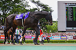 TOKYO,JAPAN-JUNE 05: Logotype #8,ridden by Hironobu Tanabe,is walking at the paddock before the Yasuda Kinen at Tokyo Racecourse on June 05,2016 in Fuchu,Tokyo,Japan (Photo by Kaz Ishida/Eclipse Sportswire/Getty Images)