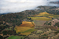 aerial photograph of vineyards in autumn with coastal fog to the western Mendocino County,  California