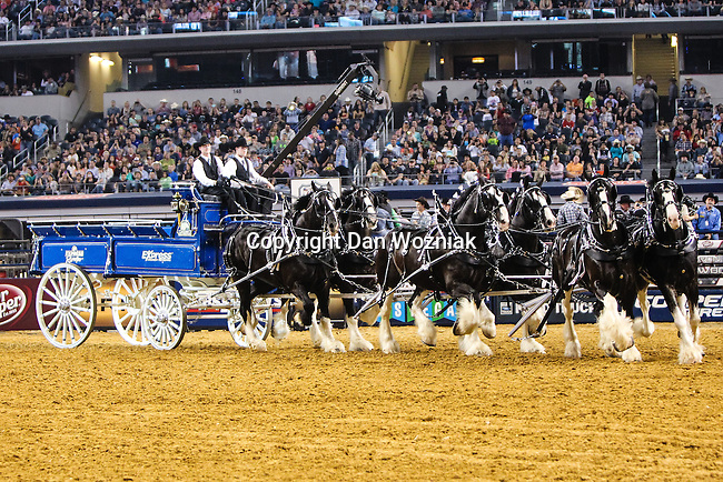 Clydesdales horses in action during the Professional Bull Riders, Iron Cowboy V bull riding event, at the AT & T stadium in Arlington, Texas.