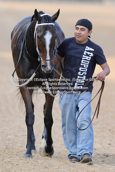 #6 Euphrosyne after the running of the Honeybee Stakes (Grade III) at Oaklawn Park in Hot Springs, Arkansas-USA on March 8, 2014. (Credit Image: © Justin Manning/Eclipse/ZUMAPRESS.com)