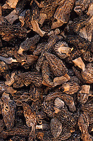 Europe/France/Limousin/19/Corrèze/Pays de Brive/Brive-la-Gaillarde: Morilles séchées sur le marché