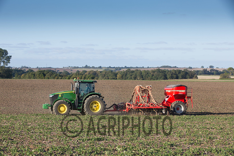Direct drilling Wheat into bean stubble <br /> Picture Tim Scrivener 07850 303986<br /> ….covering agriculture in the UK….