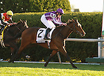 15 October 2011.  Together and jockey Colm O'Donoghue win the 28th running of the Queen Elizabeth II Challenge Cup GRI $400,000 at Keeneland Racecourse for owners Mrs. John Magnier, Michael B Tabor and Derrick Smith and trainer Aidan O'Brien.
