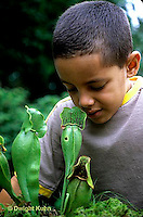 CA18-046z  Pitcher Plant - boy examining plant