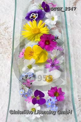 Gisela, FLOWERS, BLUMEN, FLORES, photos+++++,DTGK2547,#f#, EVERYDAY