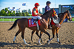 TORONT,CANADA-SEP 14: El Tormenta,ridden by Eurico da Silva, is post parading before the Woodbine Mile at Woodbine Race Track on September 14,2019 in Toronto,Ontario,Canada. Kaz Ishida/Eclipse Sportswire/CSM