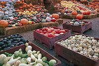 Fresh Squash and Pumpkin Harvest Display at Farmer's Market, Keremeos, BC, Similkameen Valley, British Columbia, Canada