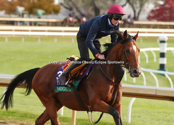 Mogul, trained by trainer Aidan P. O'Brien, exercises in preparation for the Breeders' Cup Turf at Keeneland Racetrack in Lexington, Kentucky on November 5, 2020.