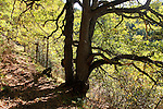 El Barida. Poble de Cava. Mirador. Alt Urgell. GR 150 Cami de coll d'Eruga