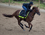 APRIL 30, 2015: Far Right, trained by Ron Moquett, exercises in preparation for the 141st Kentucky Oaks during morning workouts at Churchill Downs in Louisville, Kentucky. Ting Shen/ESW/Cal Sport Media