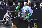 Jan.21, 2013 - Hot Springs, Arkansas, U.S - Jockey Alex Birzer road Chris Richard trained Casper The Cat to victory in the 3rd race Saturday afternoon at Oaklawn Park.  (Credit Image: © Jimmy Jones/Eclipse/ZUMAPRESS.com)