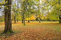 Autumn leaves, Dunham Massey, Manchester......Copyright..John Eveson, Dinkling Green Farm, Whitewell, Clitheroe, Lancashire. BB7 3BN.01995 61280. 07973 482705.j.r.eveson@btinternet.com.www.johneveson.com