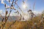 Sunset through grasses.  Bluff Trail Over Strait of Juan de Fuca.   Fort Ebbey State Park.  Whibey Island, WA.  Boulders and surf.