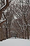 "Walking through a snowy central park with a view of ""the mall,"" a long path lined with trees"