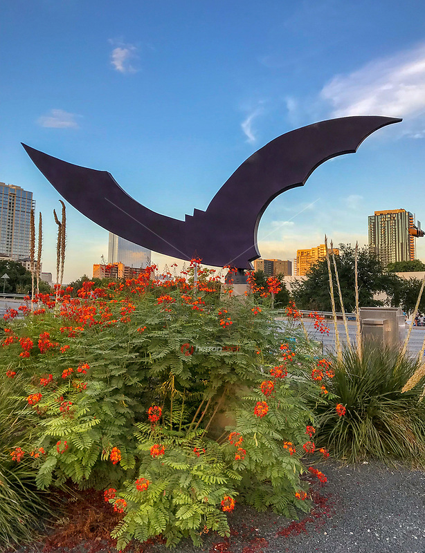 """As crowds gather nightly to watch 1.5 million Mexican free-tailed bats shoot out from under the Congress Avenue Bridge. Across Congress Street from the Statesman stands a sculpture, """"Nightwing,"""" that celebrates Austin's iconic bats."""