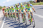 Tinkoff-Saxo on the front of the peloton during Stage 6 of the 2015 Presidential Tour of Turkey running 184km from Denizli to Selcuk. 30th April 2015.<br /> Photo: Tour of Turkey/Mario Stiehl/www.newsfile.ie