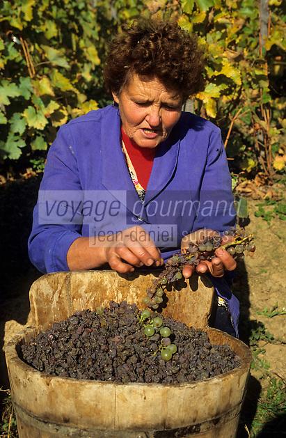"""Europe/Hongrie/Tokay/Env Sarospatak: Les vignes du château Megyer - Tri manuel des """"Aszu"""""""