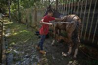 VILLAVICENCIO - COLOMBIA. 13-10-2018: Un caballo recibe un baño durante el 22 encuentro Mundial de Coleo en Villavicencio, Colombia realizado entre el 11 y el 15 de octubre de 2018. / A horse receives a shower during the 22 version of the World  Meeting of Coleo that takes place in Villavicencio, Colombia between 11 to 15 of October, 2018. Photo: VizzorImage / Gabriel Aponte / Staff