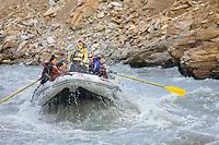Whitewater rafting down the razorback rapids of the Nenana river at the entrance to Denali National Park, Alaska.