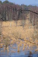 See-Verlandung, verlandender See, Sumpfzone, Moor, Sumpf, Moorweiher, Nord-Deutschland