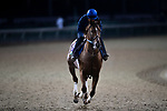 October 30, 2018 : A Breeders' Cup horse trains on the track during morning workouts at Churchill Downs on October 30, 2018 in Louisville, Kentucky. Michael McInally/Eclipse Sportswire/CSM