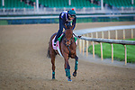 LOUISVILLE, KY - MAY 04: Dream Dance gallops in preparation for the Kentucky Oaks at Churchill Downs on May 04, 2016 in Louisville, Kentucky. (Photo by Zoe Metz/Eclipse Sportswire/Getty Images)